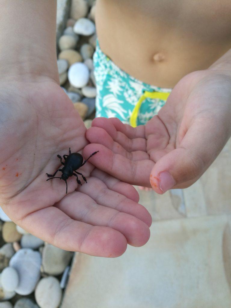 Zelfs de kleinste beestjes zijn interessant voor kinderen! Ontmoet Cooper de kever